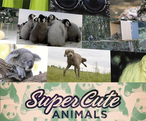 Zwierzęta, które kochamy / Super Cute Animals