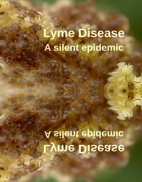 Borelioza, Cicha Epidemia / Lyme Disease